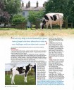 Holstein Journal August '14 - Page 3