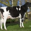 Grand dam: Roccafarm Beacon Chrissy VG-87-NL 2yr.