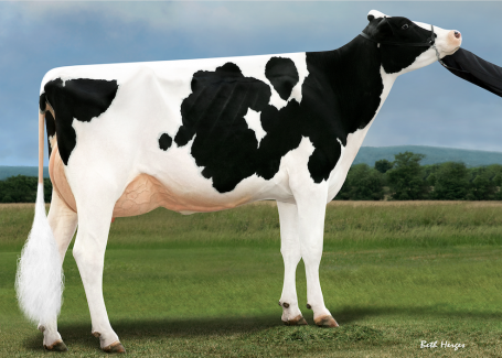 Full sister: Ms DG Delta Bridgett *RC VG-89-USA EX-MS MAX La1