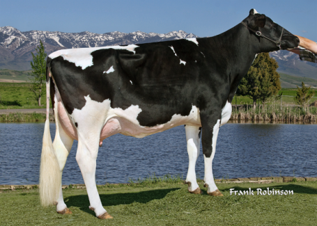 GGD: Pine-Tree Sharla Daphne VG-88-USA