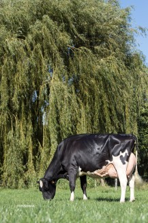 Dam: Carf Emeraude EX-91-NL @ Almost 8 years old
