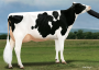 Ms DG Delta Bridgett *RC VG-89-USA EX-MS